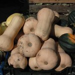 Real Food of the Week:  Butternut Squash