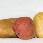 Potatoes-Gracey-MF