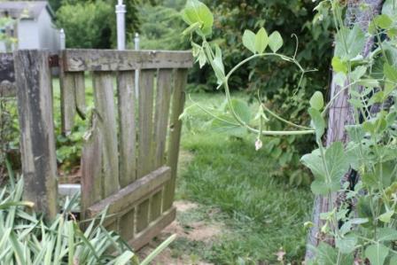 garden-gage
