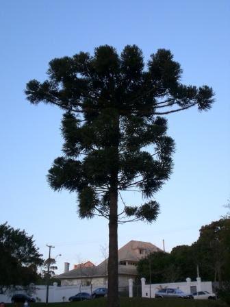 a-tree-b