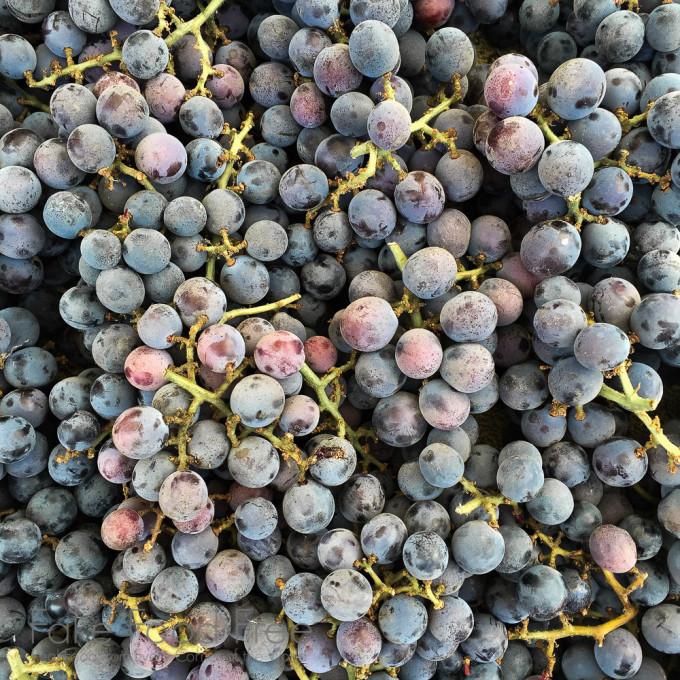 Concord Grape Martini Recipe — Dishmaps