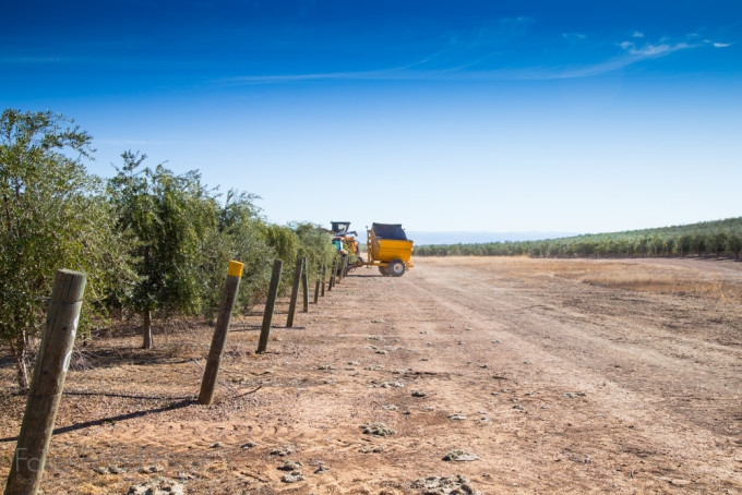 Visiting the farms of California Olive Ranch | Fake Food Free